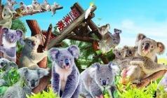 【欢享长隆】广州长隆野生动物园双飞半自助4日游