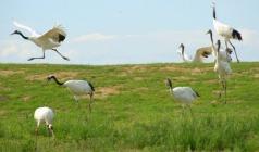 【北之草原】东北哈尔滨、扎龙、黑山头、呼伦贝尔草原、跨国湿地双飞7日游