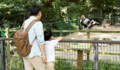 【暑期特辑】巴厘岛亲子狂欢6天<放生小海龟,水上乐园嗨玩>