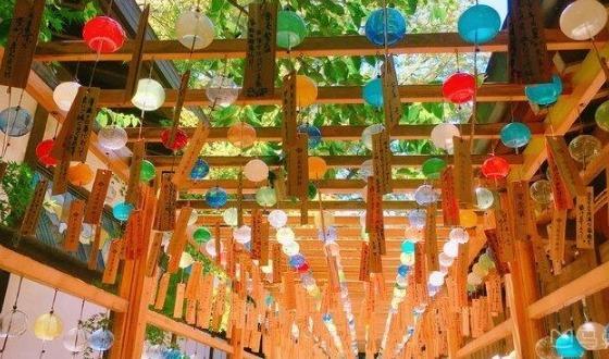 探古之旅— 日本本州京都奈良双古都+川越古城+合掌村+富士山半自助6日游