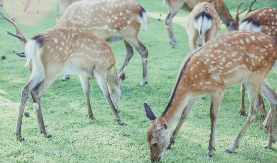 【旅展系列 老爸老妈旅游节】—日本本州双古都赏花温泉6日特惠游