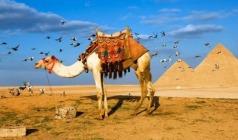 【暖冬阳光】埃及迪拜深度12日游