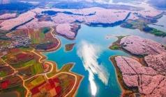 【樱花海·假装在日本】平坝樱花+金海雪山、黄果树、西江、荔波大小七孔双飞5日游