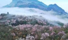 【樱为有你,春暖磐安】中华舞龙故乡、东川赏樱花二日游